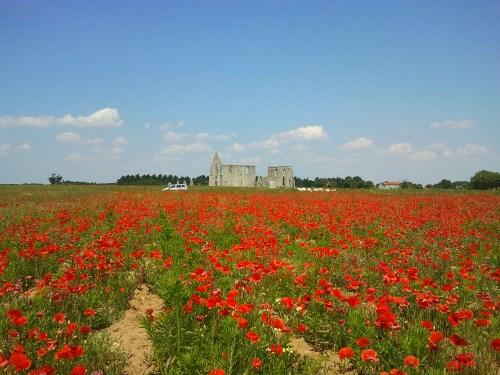 Abbaye Des Chateliers, Ile de Re